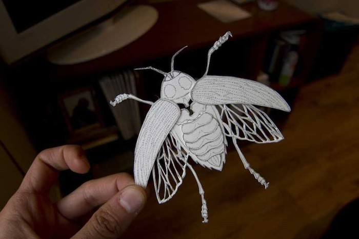 janineshroffpaperbug