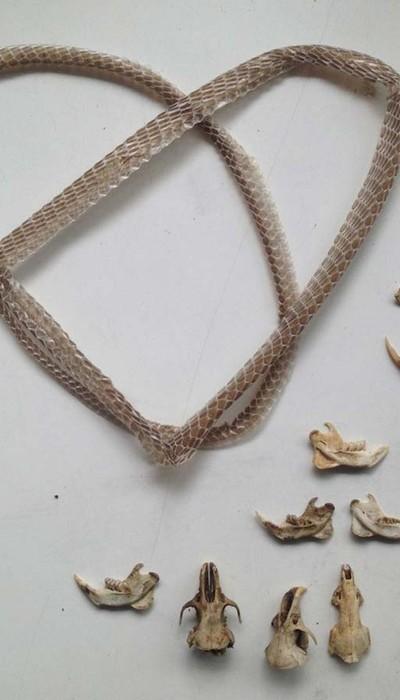 Snake Skin & Bone Collection