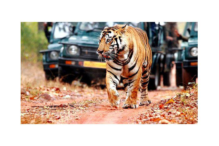 Ranthambore National Park. Image Credit: Travel Triangle