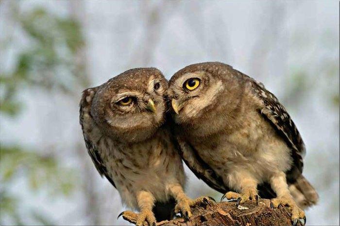 Photograph of owls taken by Rathika Ramasamy