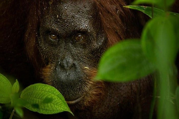 Photograph of a Howler Monkey by Kalyan Verma
