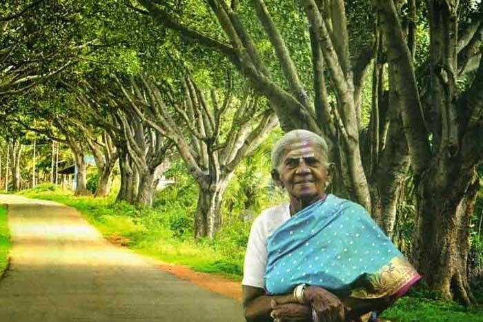 Thimmakka and her 3km stretch of Banyan Trees. Image Source: Srinivasan G