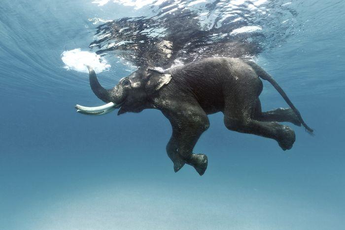 Rajan The Elephant