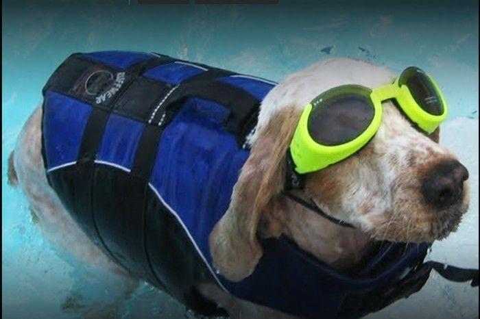 Doggie Dog World, Mumbai. Image Source: LBB, Mumbai