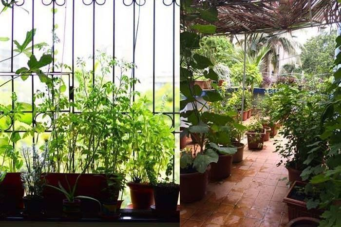Profiles Of 5 People Who Have Grown Terrace Gardens In Their Mumbai Homes    Homegrown