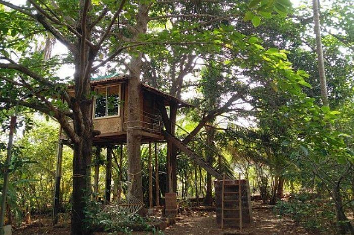 The Tree House at Atithi Parinay. Image Source : Devyani Nighoskar