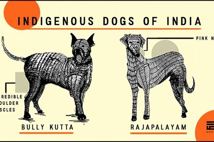 12 Native Indian Dog Breeds That You Never Knew About - Homegrown