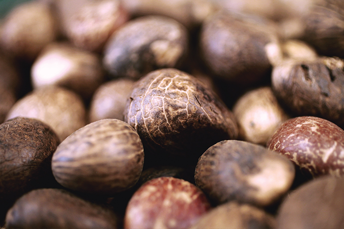 Tagua nut. Source: The Consulate General of Ecuador and ProEcuador India